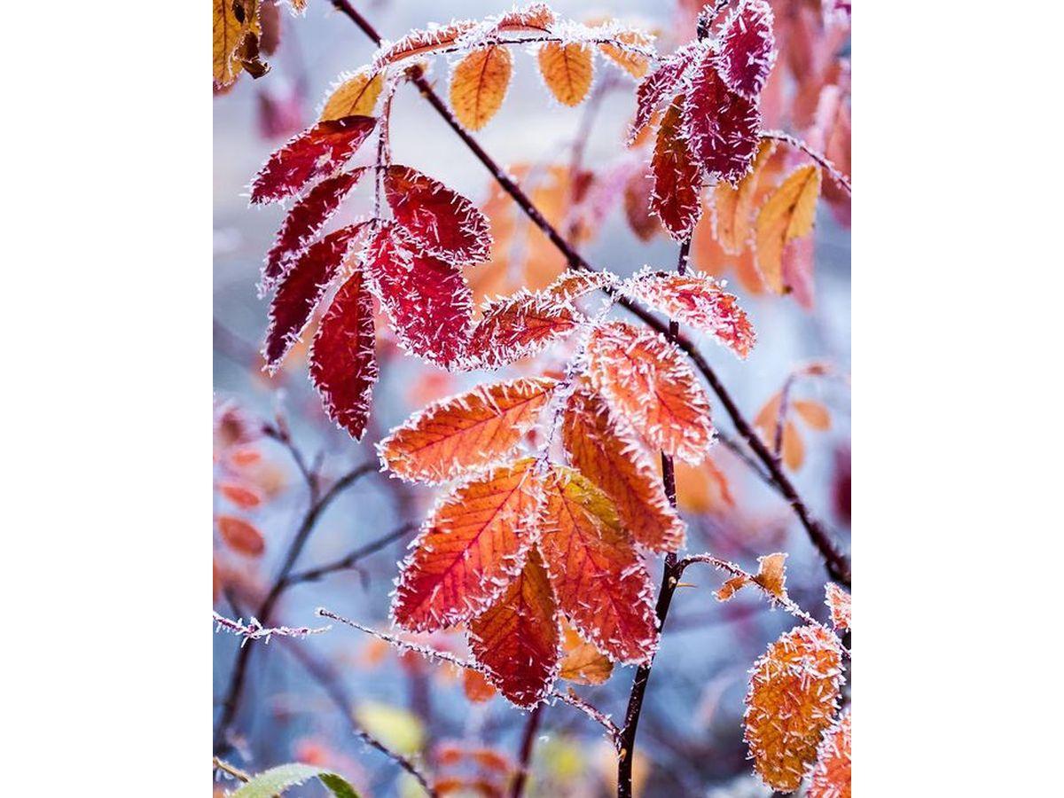 秋季養生對策 10種天然食材超「秋」首選