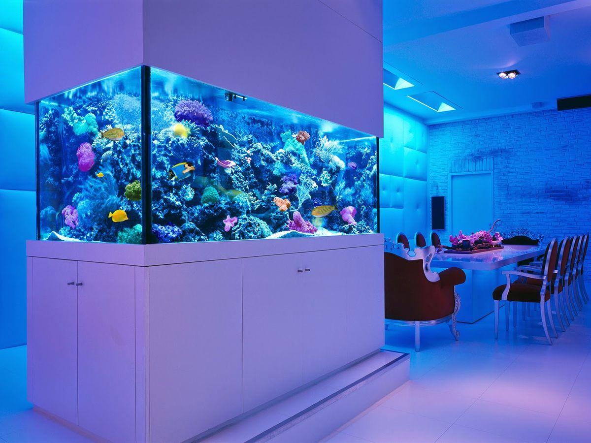 居家風水 選對魚缸才能風生水起